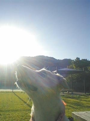 sunnyday.jpg