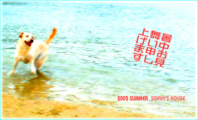 2005 夏